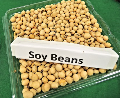 Soy is NOT a Health Food